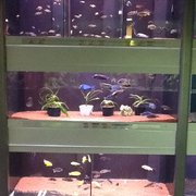 Smaller aquariums / des aquariums plus petits.