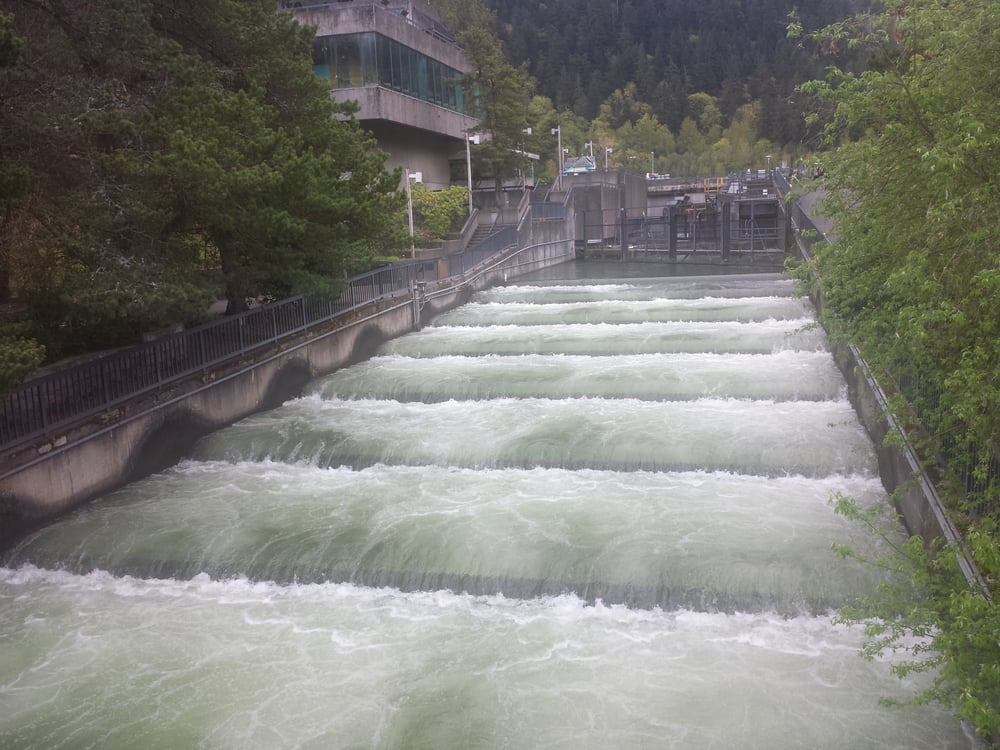Bonneville dam fish ladder yelp for Fish hatchery near me