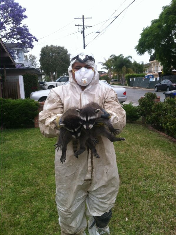 Rodent Control & Attic Cleaning in Orange County