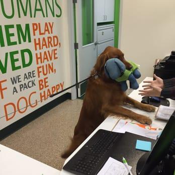 Dog Grooming Jobs Dallas Tx