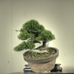 Berlin Bonsai Shop Suteki, Berlin