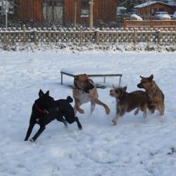 Hundeschule harburg