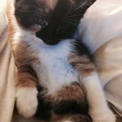 cat kneading stomach