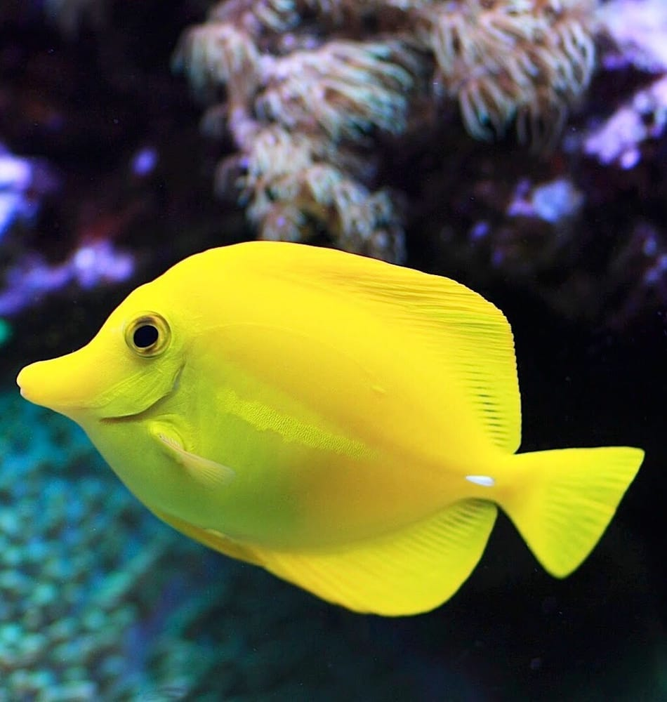 Fish tank services aquarium services waldorf md for Fish tank cleaning service near me