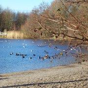 Pflanzenführungen am Krupunder See, Halstenbek, Schleswig-Holstein