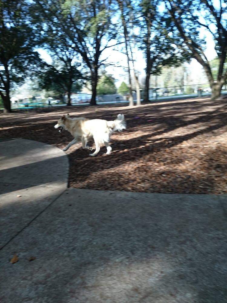 Winter Park Fl Dog Walking