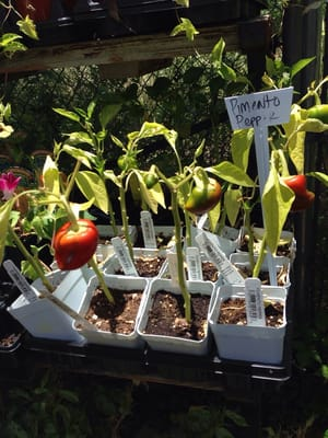Red Barn Garden Center Kwekerijen En Tuinieren Austin Tx Verenigde Staten Yelp