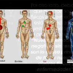Los diferentes meridianos del cuerpo