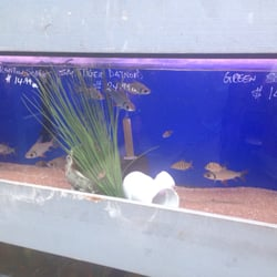 Xtreme fish pets 15 photos pet stores alief for Pet stores with fish near me