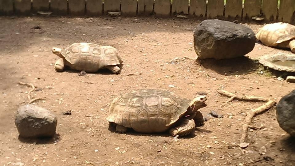 Mayaguez Zoo Puerto Rico Mayaguez Zoo Mayag ez Puerto Rico Puerto Rico
