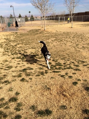 Police Memorial Dog Park Las Vegas