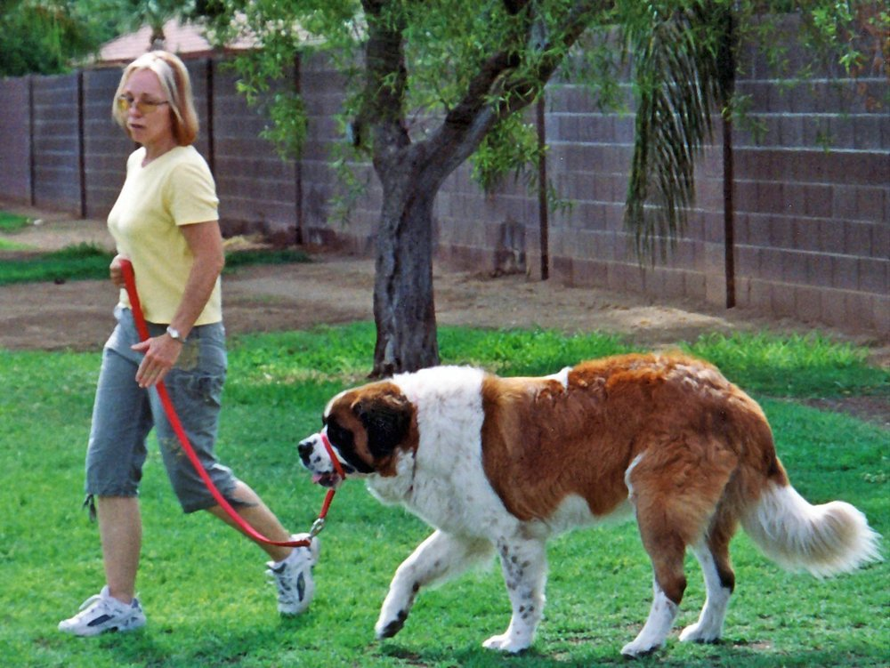 How a Pet Became a Therapy Dog advise