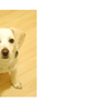 Yelp user Agnes W.