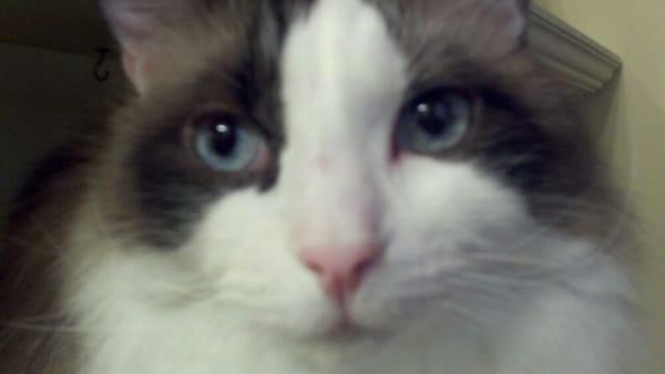 Knittycats L.