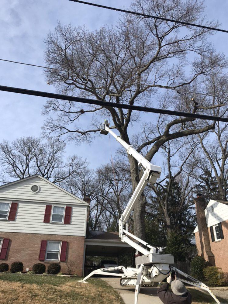Mills Tree Service