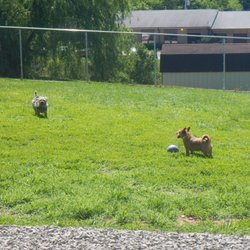 Airy Pines Boarding Kennel - 13 Photos - Pet Sitting - 931