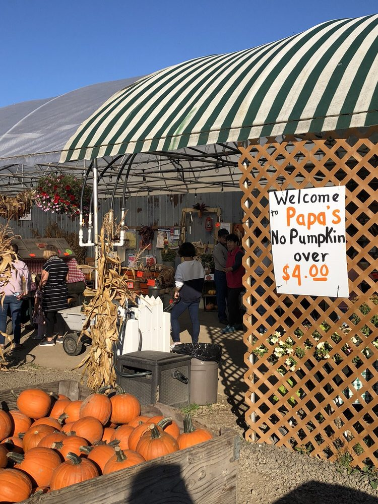 Papa's Pumpkin Patch: 20345 SW Scholls Sherwood Rd, Sherwood, OR