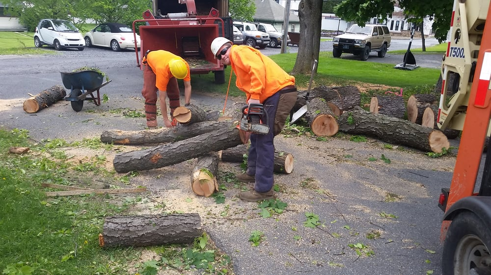 Cutting Edge Tree Professionals: 180 Liberty St, Boalsburg, PA