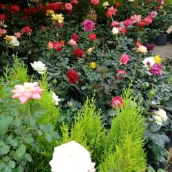 Mercado De Flores 15 Fotos Viveros Y Jardineria Calle