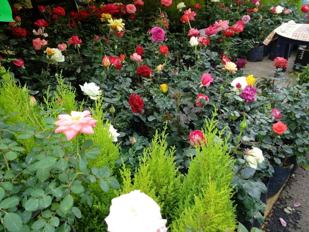 Mercado de flores madreselva de xochimilco 15 fotos for Jardineria xochimilco