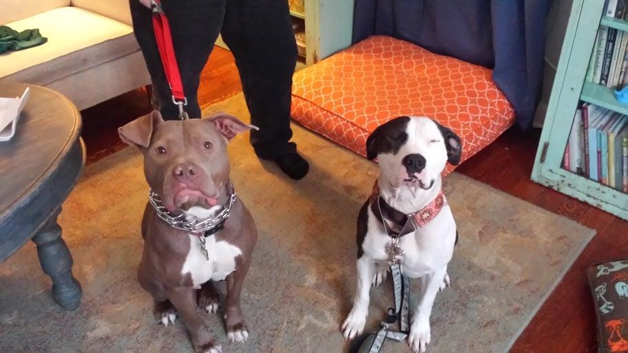 Rescue Dogs Near Chicago Il