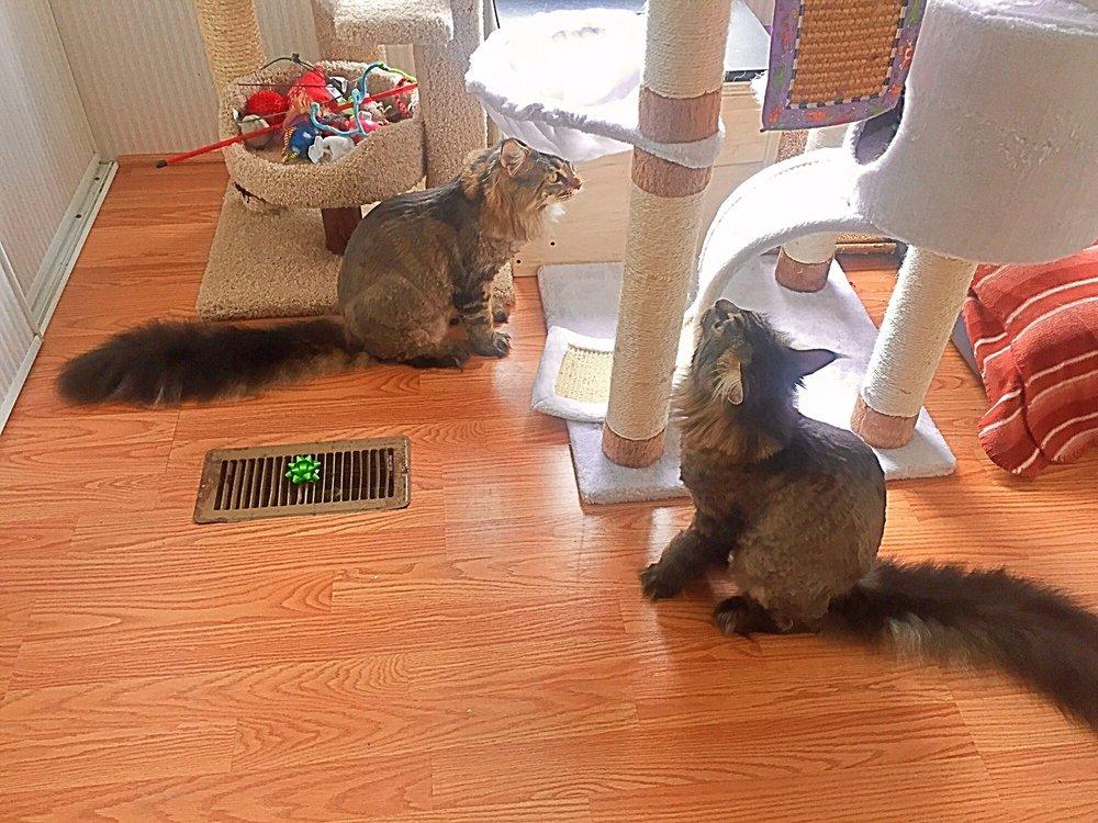 cat condos for sale