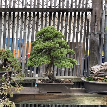 Photo Of Yamaguchi Bonsai Nursery Los Angeles Ca United States