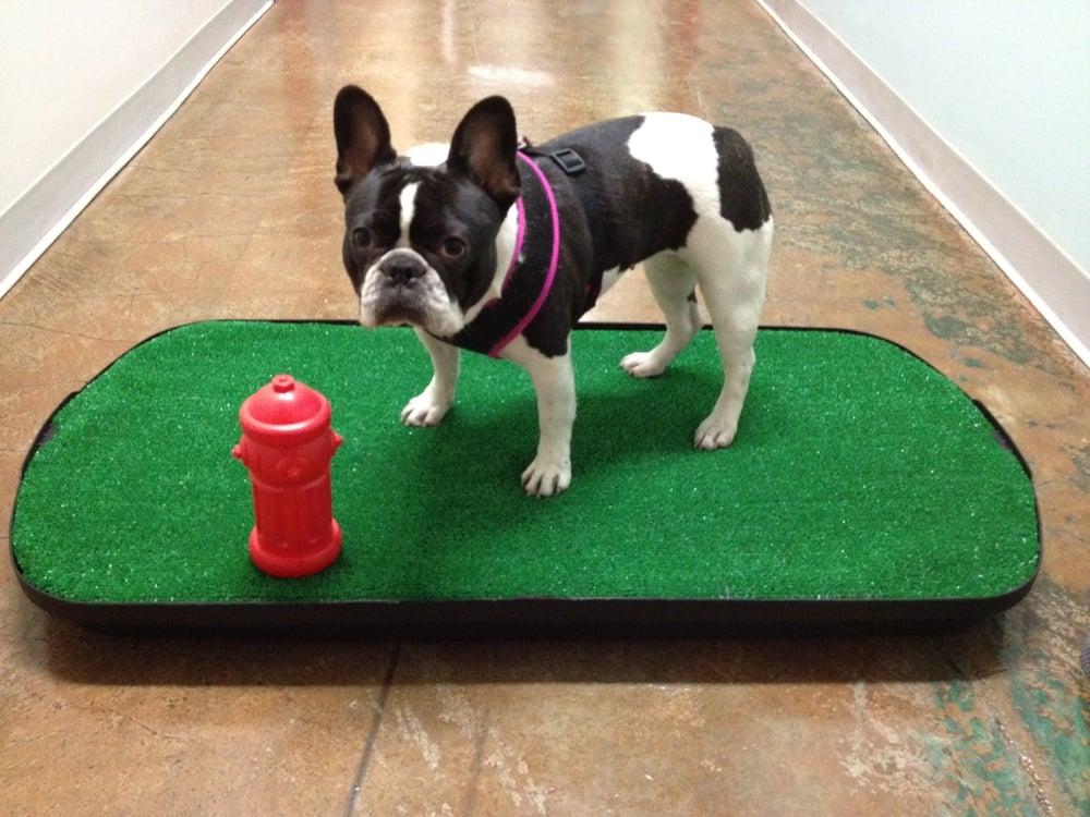 Go Doggy Go Indoor Dog Potty Llc Pet Training 420 S
