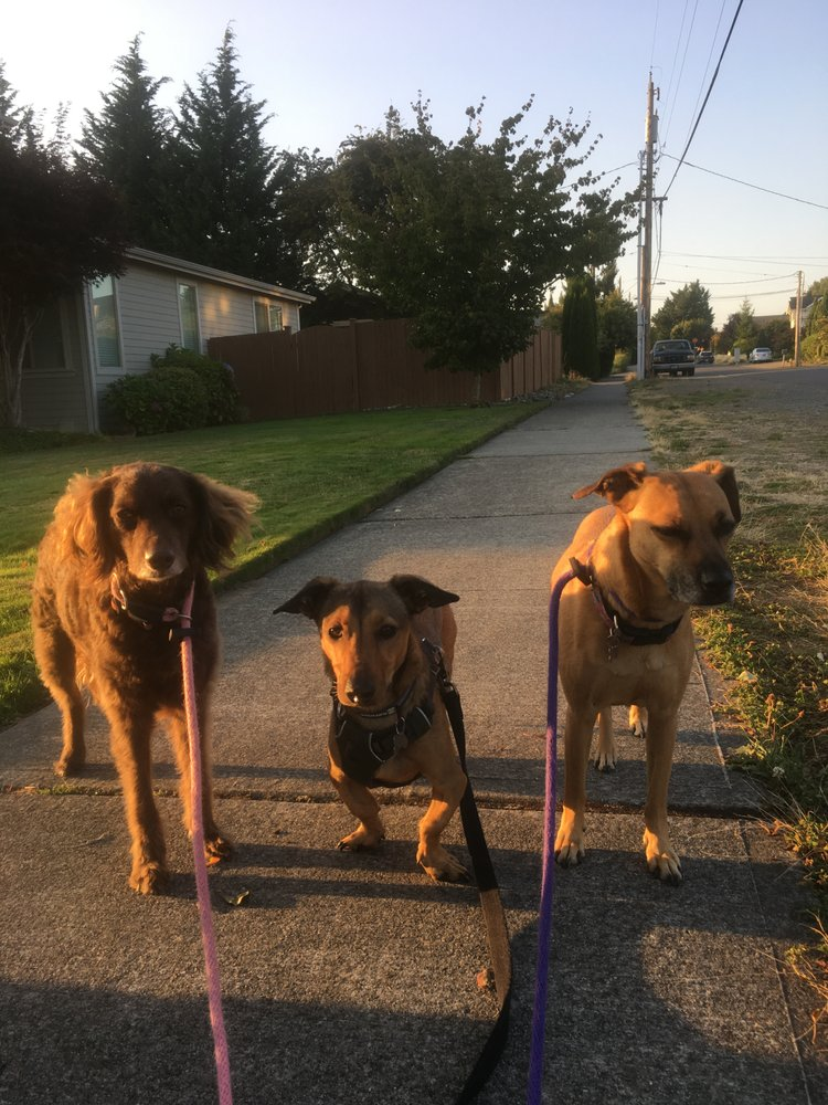 Walk Hike Play: Kirkland, WA