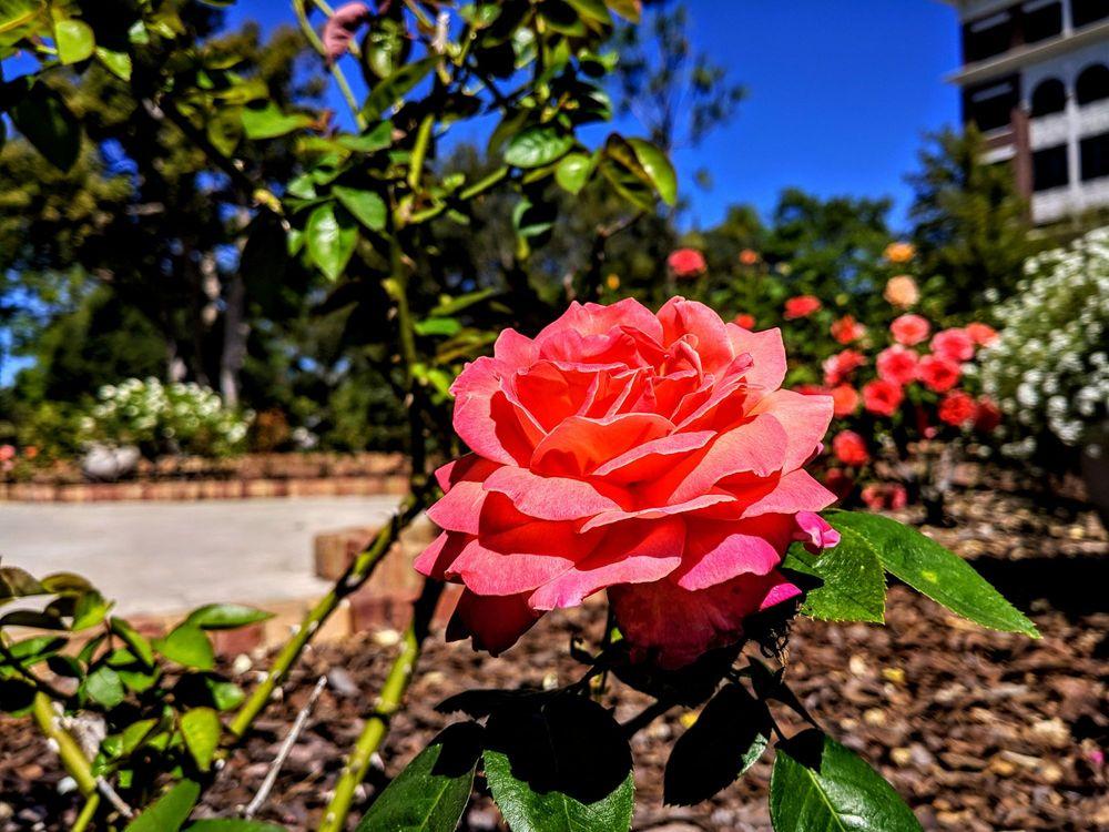 Downtown Winter Park Historic District: Downtown Winter Park, Winter Park, FL