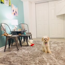 Doggy Strides Pet Sitting & Dog Walking - 2019 All You Need