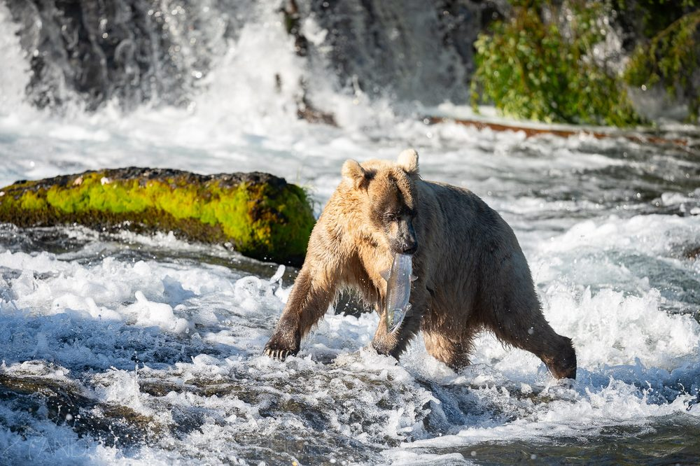 Katmai National Park: King Salmon, AK