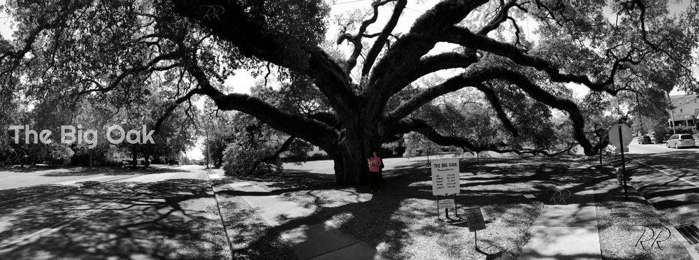 The Big Oak: 124 E Monroe St, Thomasville, GA
