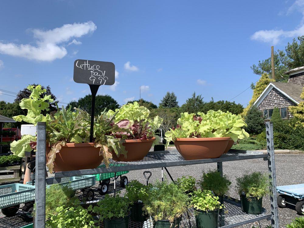 Middle Road Plantations: Riverhead, NY