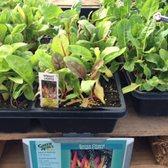 Photo Of Green Acres Nursery Supply Folsom Ca United States Swiss