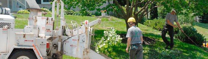 Williams A-1 Expert Tree Service: 57710 M 51 S, Dowagiac, MI