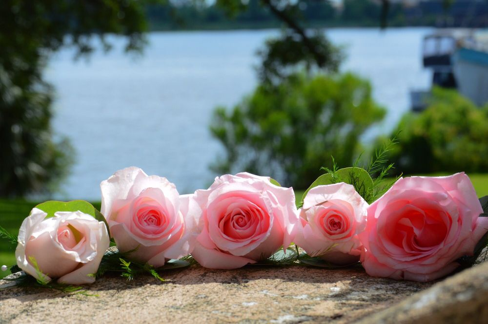 The Daisy Fair Flowers