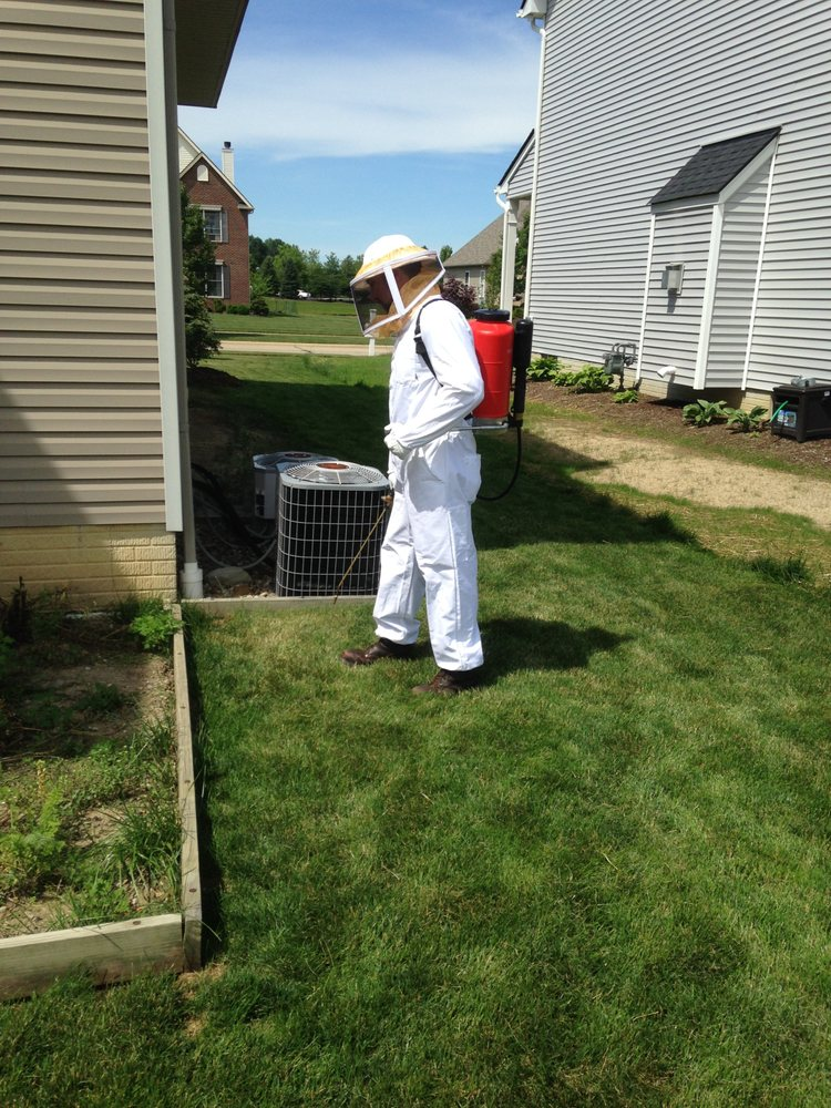 Express Pest Control: 262 Karl St, Berea, OH