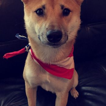 Puppy Avenue - 28 Photos & 31 Reviews - Pet Adoption - 10300