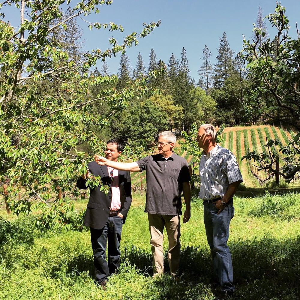 Red Cap Vineyards: 891 Ponderosa Dr, Angwin, CA