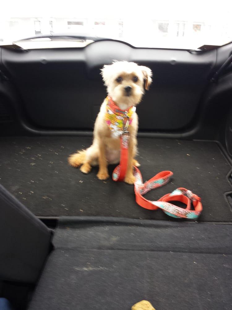 Classy Canine Pet Grooming: 2811 Reidville Rd, Spartanburg, SC