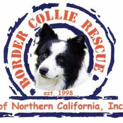 Border Collie Rescue of Northern California - Animal