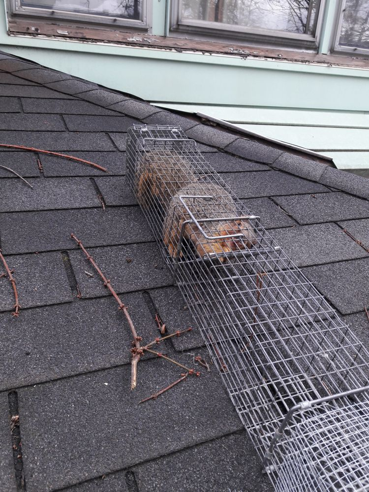 Frontline Animal Removal: 13551 Sunflower Ave NW, Mogadore, OH