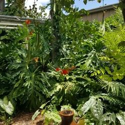 South Texas Botanical Gardens And Nature Center 118 Photos 25 Reviews Botanical Gardens