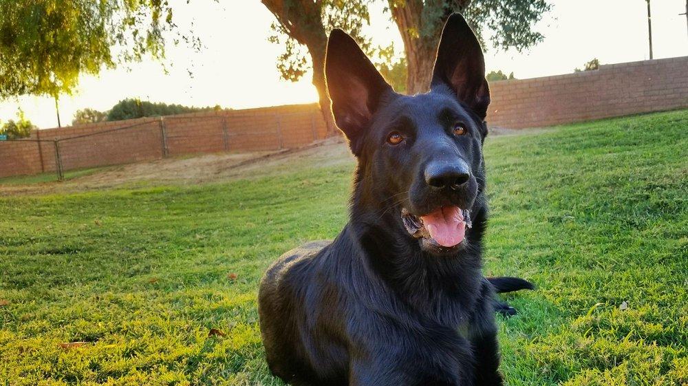 Pet Rescue Center: 83496 Ave 51, Coachella, CA