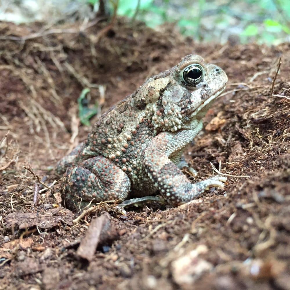 Mill Grove Wildlife Sanctuary - John James Audubon Center: 1201 Pawlings Rd, Audubon, PA
