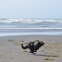 Photo Of Sandpiper Beach Resort Pacific Wa United States Dog Had