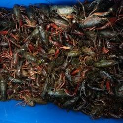 Lbc seafood market 211 photos 105 reviews seafood for Long beach fish market