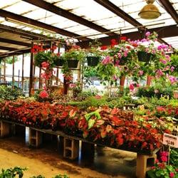 Photo Of Arbolito S Nursery San Antonio Tx United States