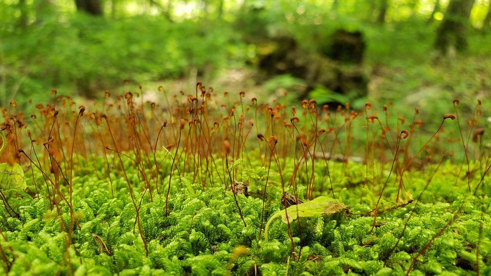 Social Spots from Cincinnati Nature Center